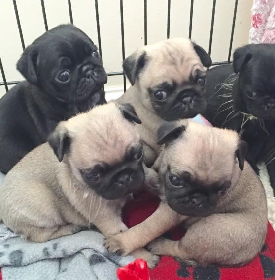 Dogs For Sale in Virgin Utah