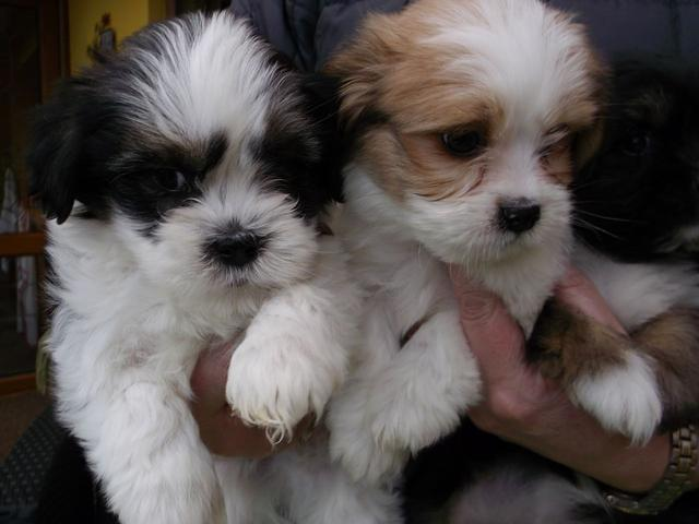 Dogs For Sale in Bergerac France